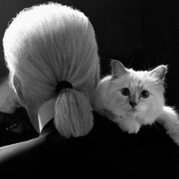 Gli strazianti post su Instagram di Choupette, il gatto «vedovo» di Lagerfeld