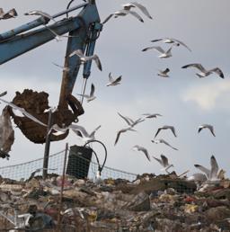 Corte Ue, Italia ok per la classificazione dei rifiuti  con codice speculare