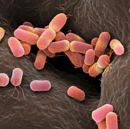 Batteri ogm  al posto dei farmaci. Al via i primi test sull'uomo