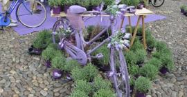 Fiore bianco di alcatraz in giardino immagine stock immagine di